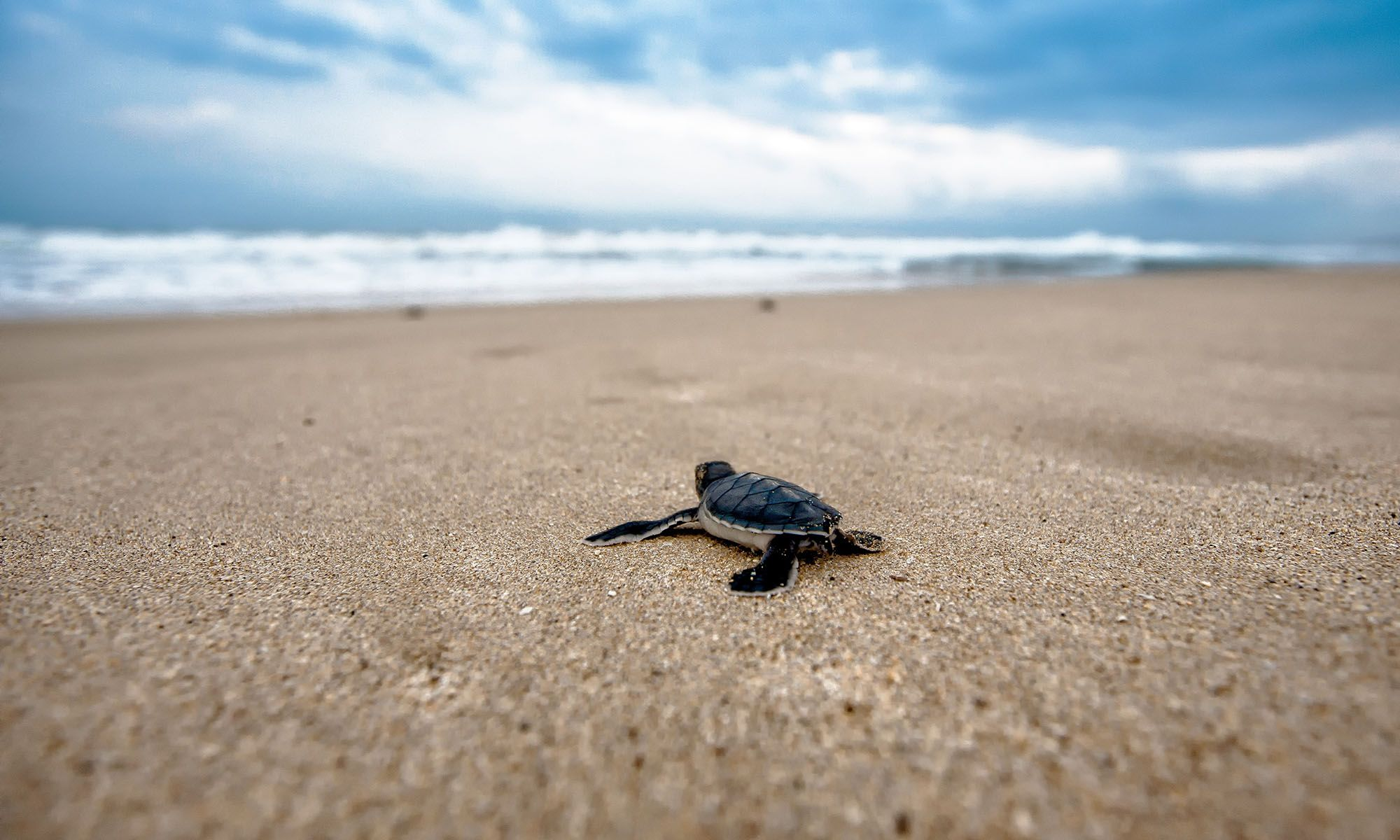 Oman Schildpadden Kijken