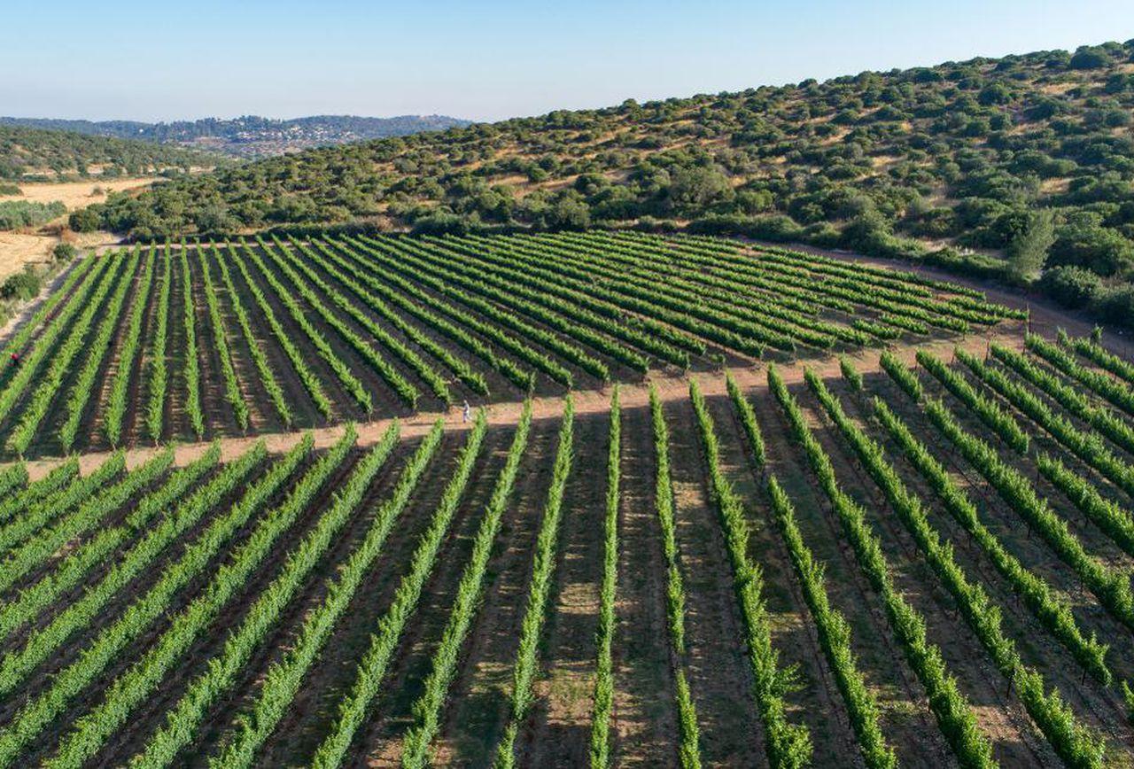 Sphera wine tasting & tour