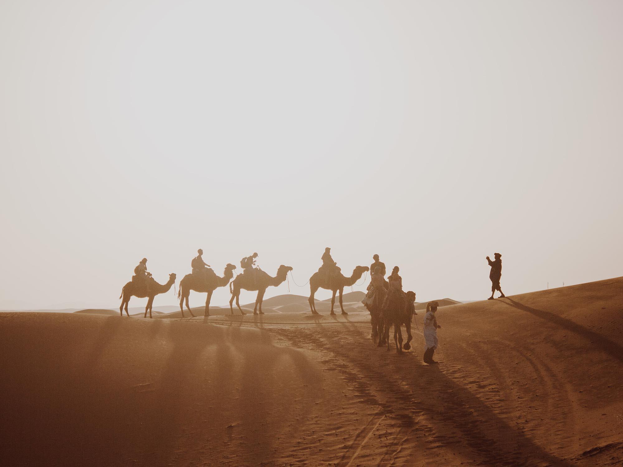 Kamelen In De Woestijn Bij Merzouga Marokko